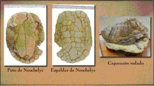 FOTO 4 tortugas.psd